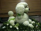 Poodle Dog In Flowers